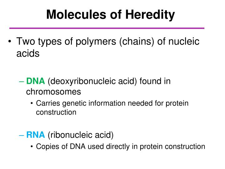 Molecules of Heredity