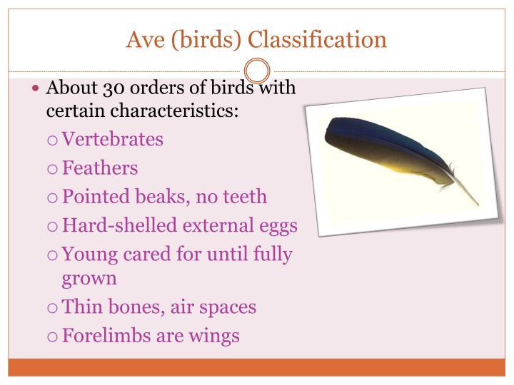 Ave (birds) Classification