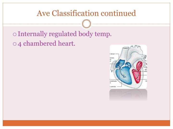 Ave classification continued