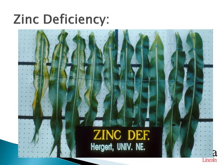 Ppt macronutrients powerpoint presentation id 2143277 for Soil zinc deficiency