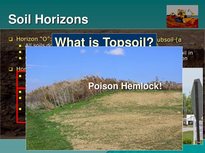 "Horizon ""O"":  Organic Layer"