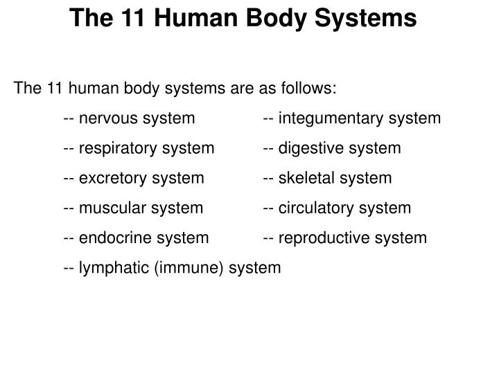 The 11 Human Body Systems