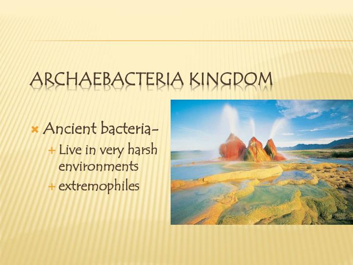 Archaebacteria Kingdom
