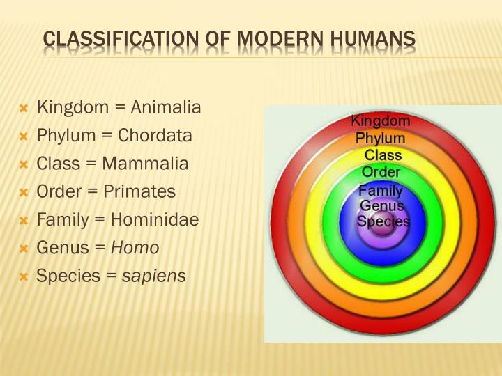 Classification of Modern Humans