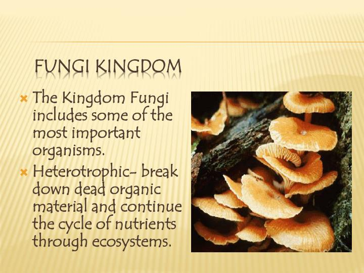 The Kingdom Fungi includes some of the most important organisms.