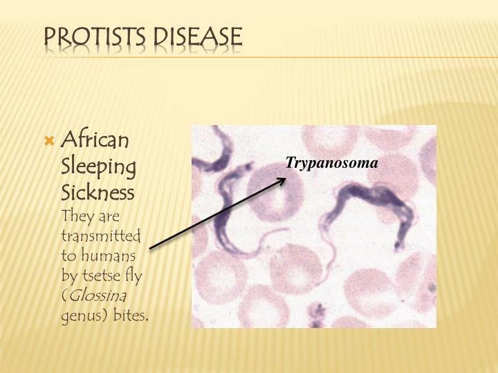 African Sleeping