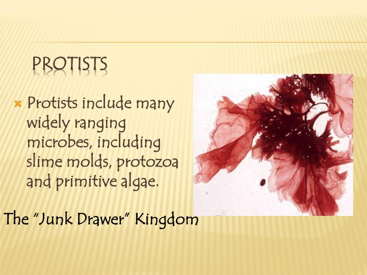 Protists include many widely ranging microbes, including slime molds, protozoa and primitive algae.