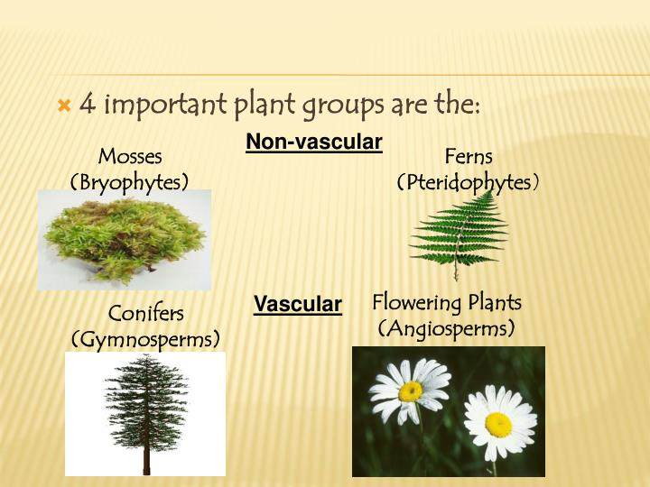 4 important plant groups are the: