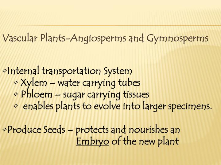 Vascular Plants-Angiosperms and Gymnosperms