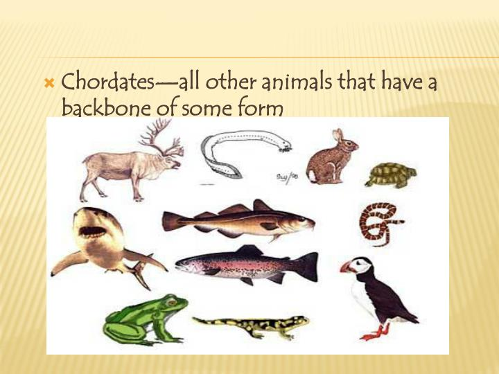Chordates—all other animals that have a backbone of some form