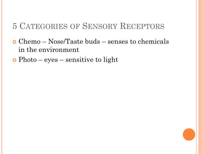 5 Categories of Sensory Receptors