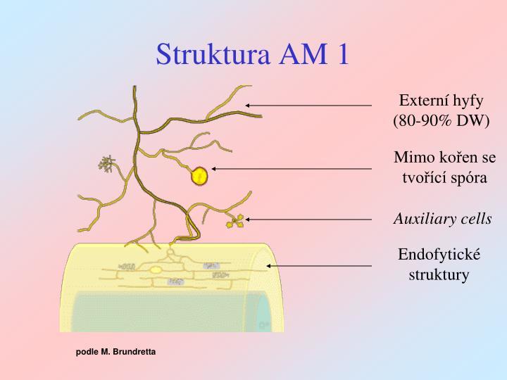 Struktura AM 1