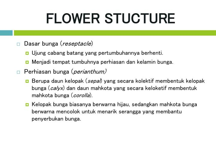 FLOWER STUCTURE