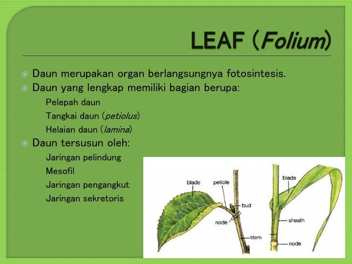 LEAF (