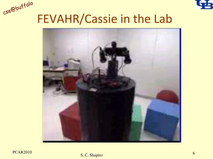 FEVAHR/Cassie in the Lab