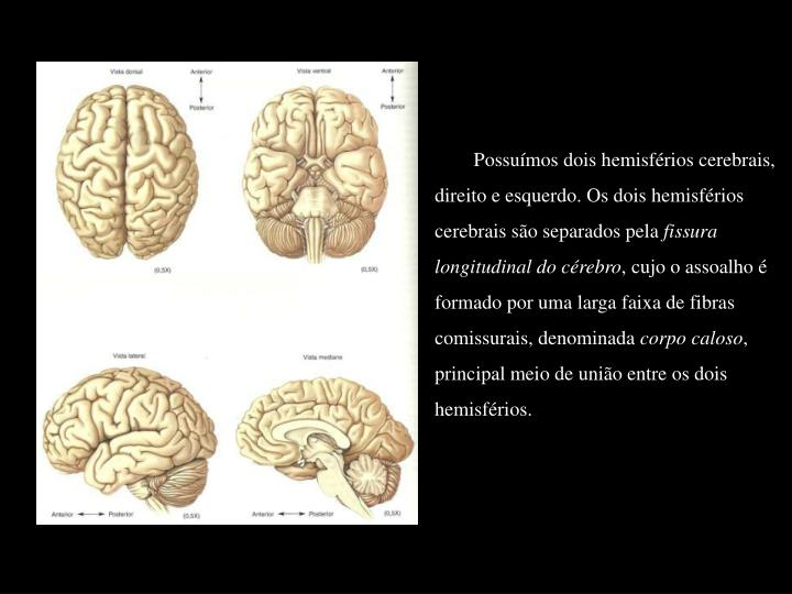 Possuímos dois hemisférios cerebrais, direito e esquerdo. Os dois hemisférios cerebrais são separados pela