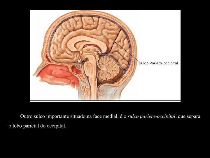 Outro sulco importante situado na face medial, é o