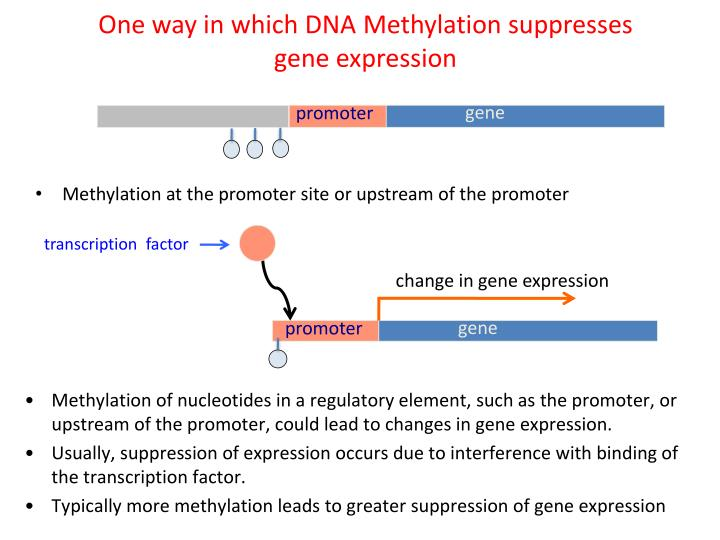 One way in which DNA