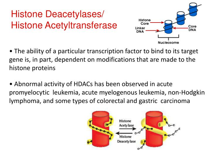 Histone Deacetylases/