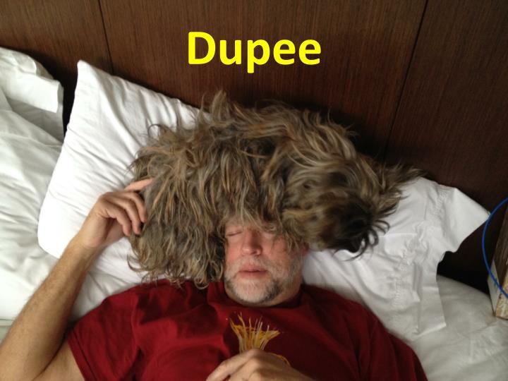 Dupee