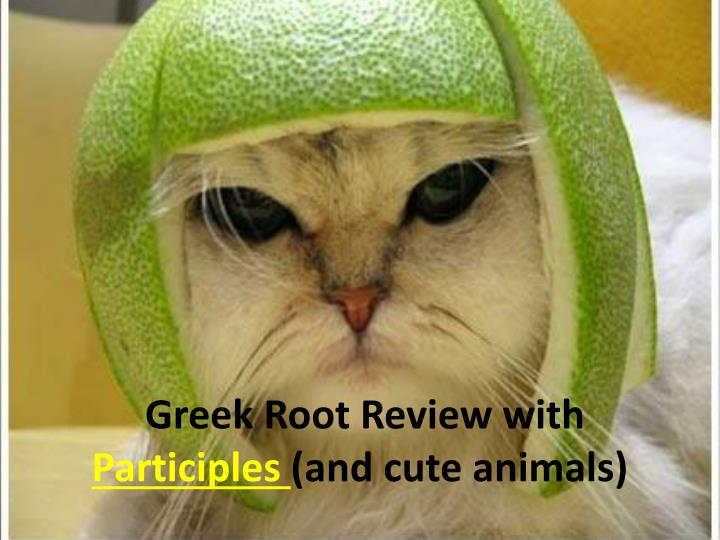 Greek root review with participles and cute animals