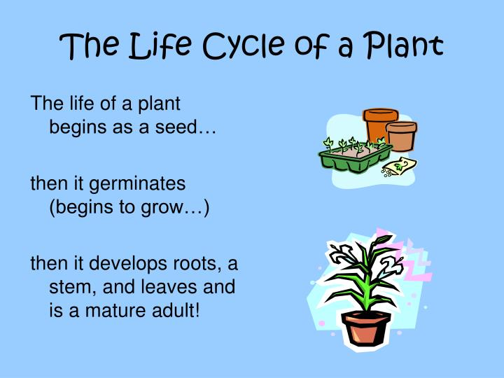 Ppt - Life Cycles Of Plants And Animals Powerpoint Presentation