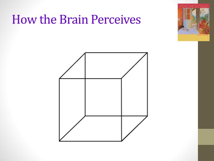 How the Brain Perceives