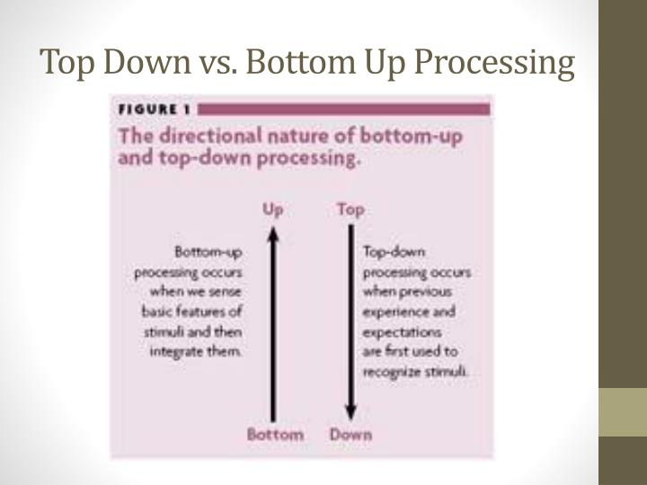 Top Down vs. Bottom Up Processing