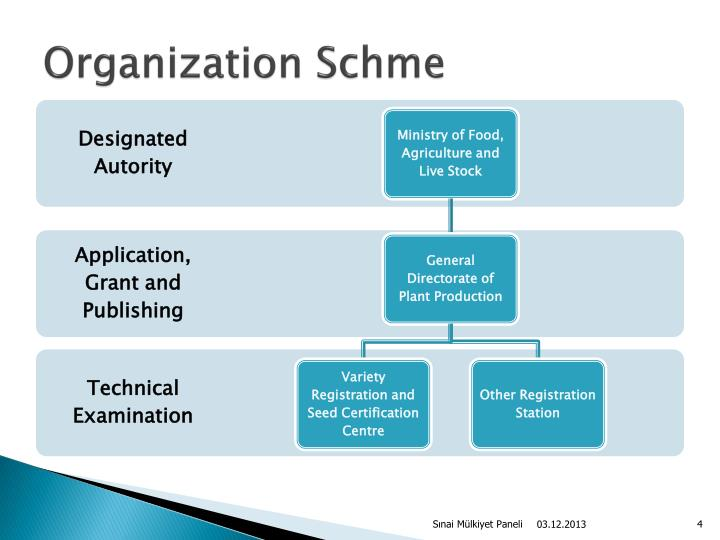 Organization Schme