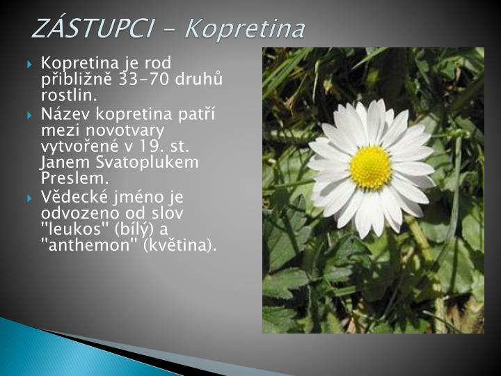 ZÁSTUPCI - Kopretina