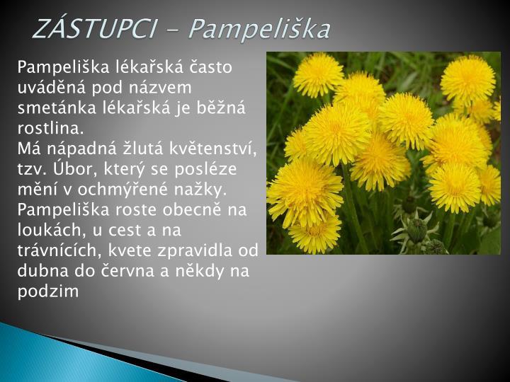 ZÁSTUPCI - Pampeliška