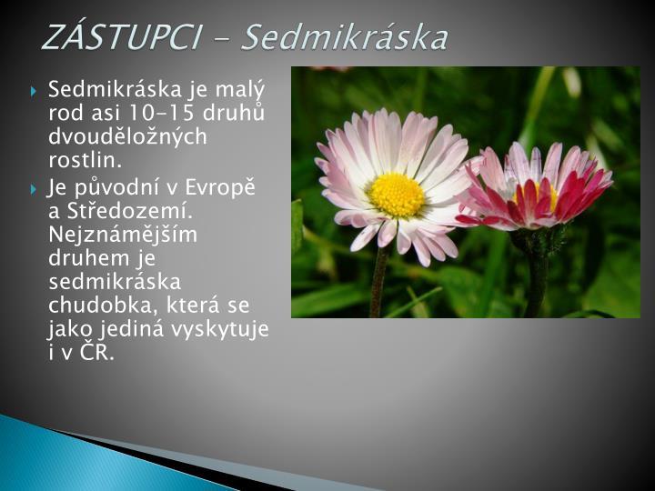 ZÁSTUPCI - Sedmikráska