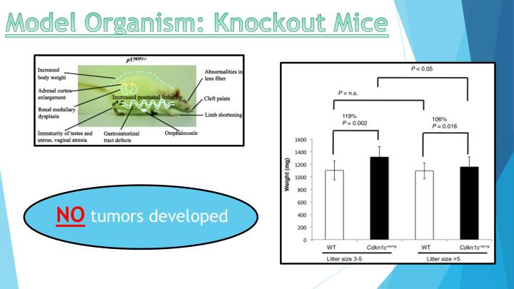 Model Organism: Knockout Mice