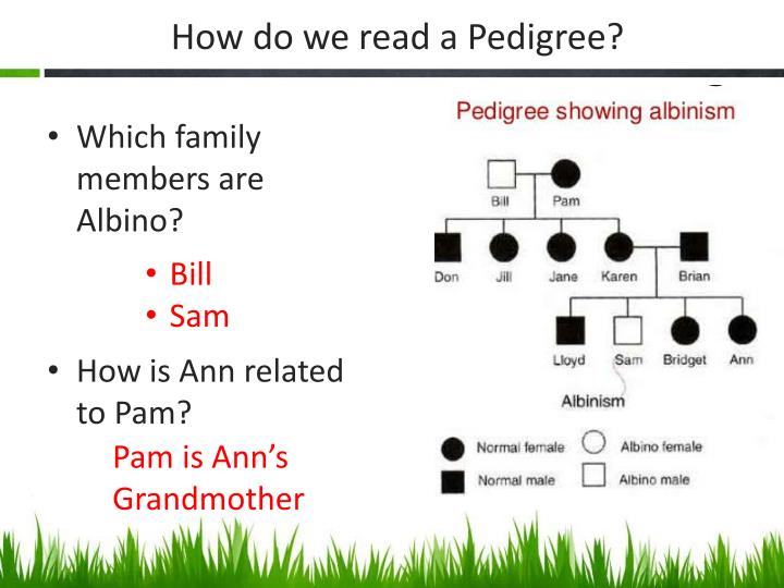 How do we read a Pedigree?