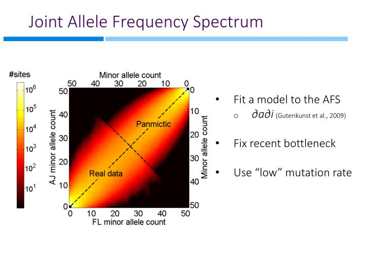 Joint Allele Frequency Spectrum