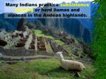 many indians practice subsistence farming or herd llamas and alpacas in the andean highlands