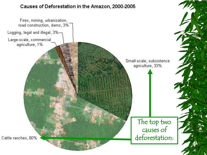 The top two causes of deforestation: