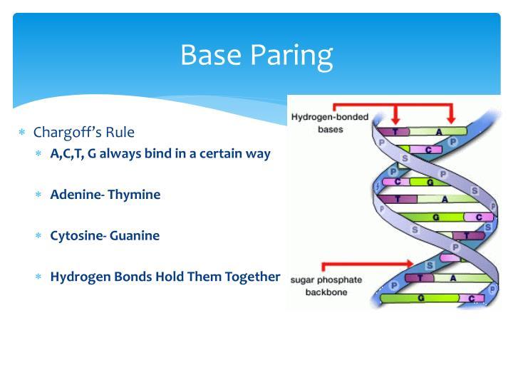 Base Paring