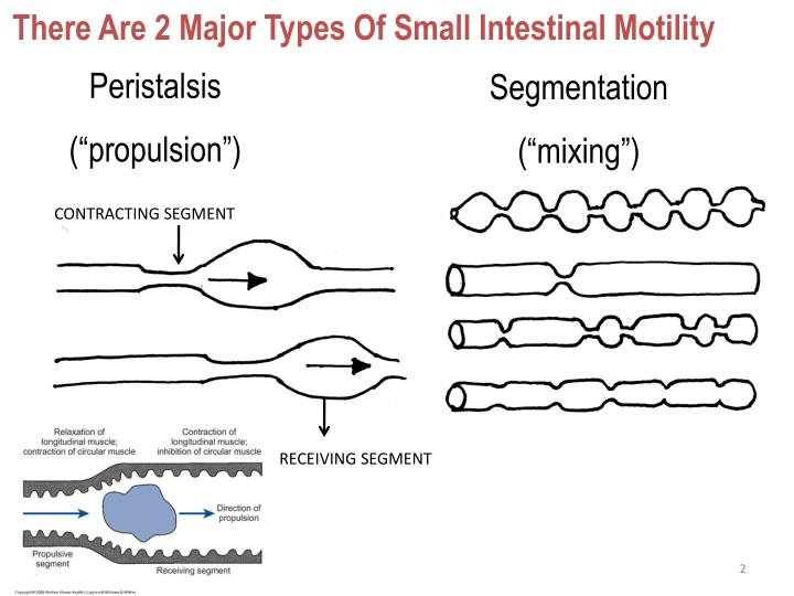 There Are 2 Major Types Of Small Intestinal Motility
