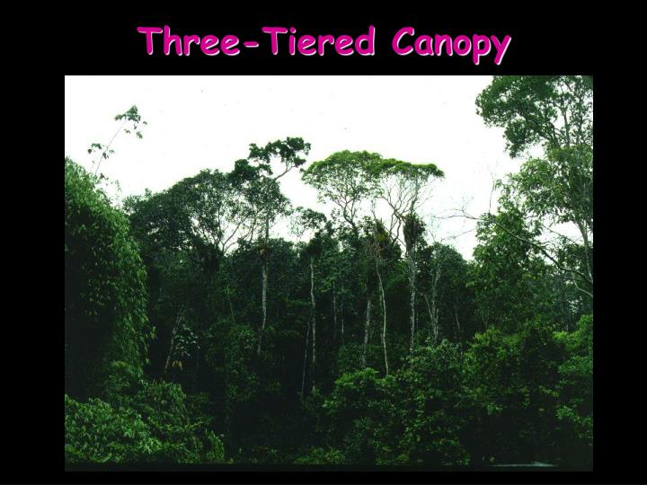 Three-Tiered Canopy