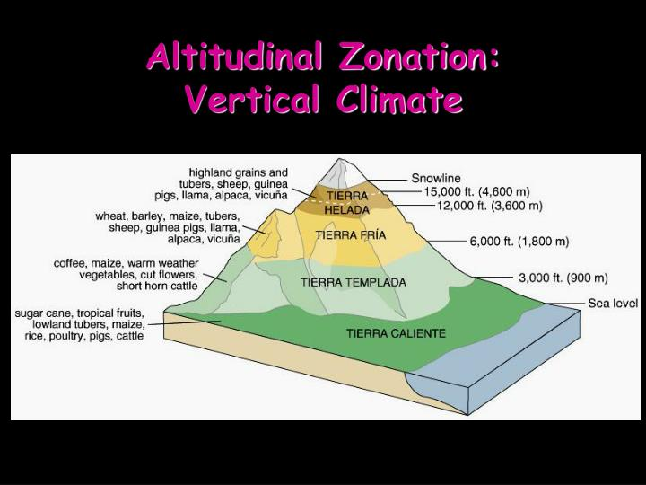 Altitudinal Zonation: