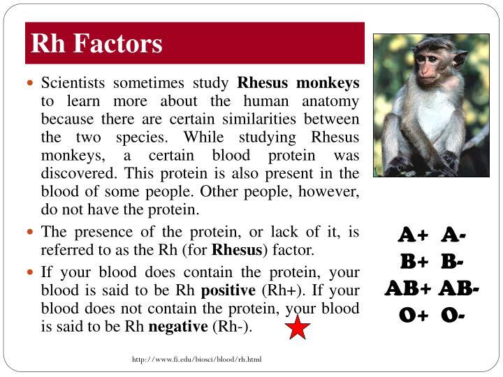 Rh Factors