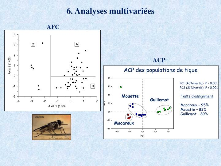 ACP des populations de tique