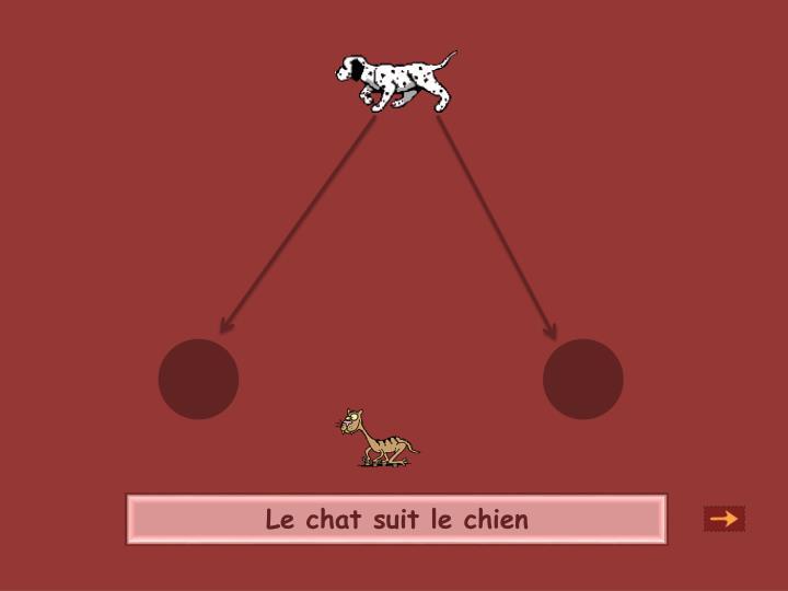 Le chat suit le chien