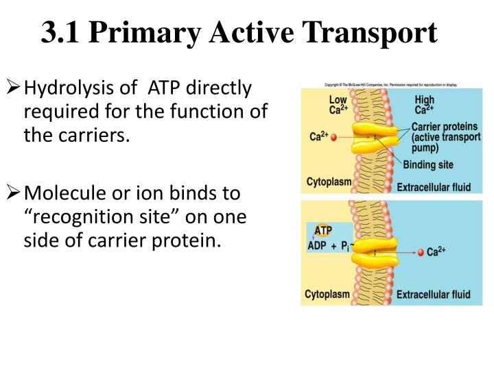 3.1 Primary Active Transport