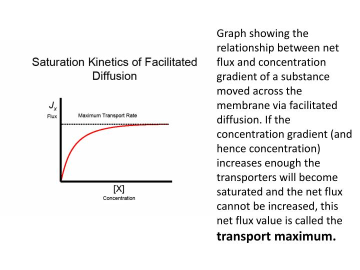 Graph showing the relationship between net flux and concentration gradient of a substance moved across the membrane via facilitated diffusion. If the concentration gradient (and hence concentration) increases enough the transporters will become saturated and the net flux cannot be increased, this net flux value is called the