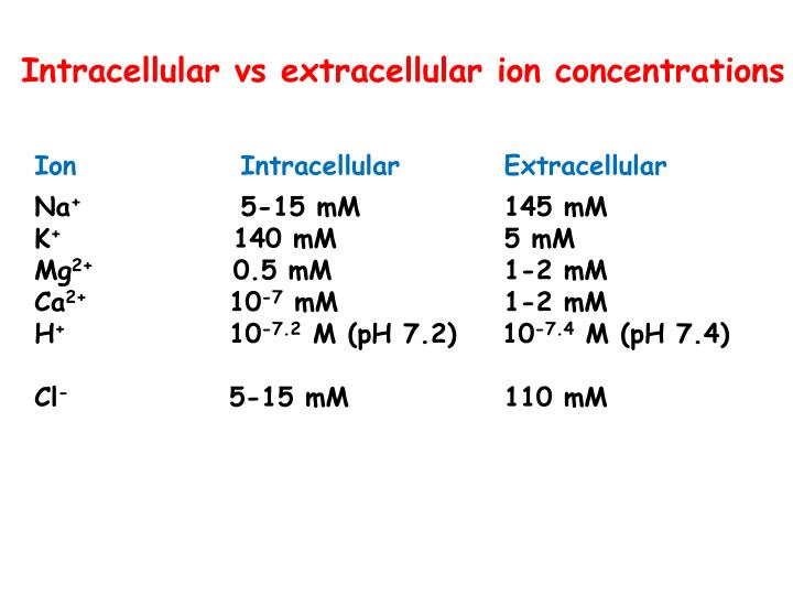 Intracellular vs extracellular ion concentrations