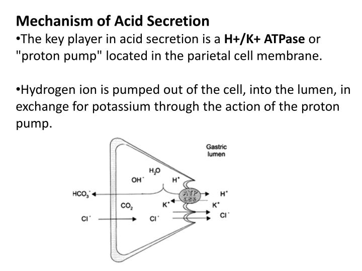 Mechanism of Acid Secretion