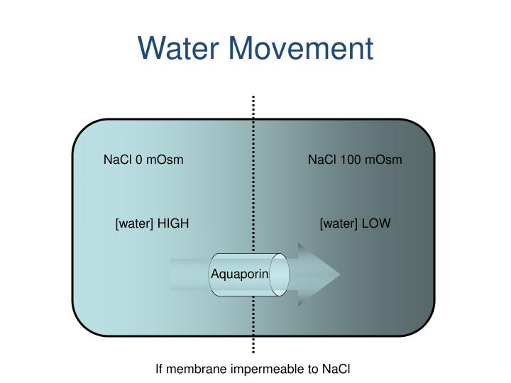 Water Movement