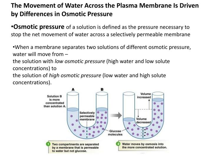 The Movement of Water Across the Plasma Membrane Is Driven by Differences in Osmotic Pressure